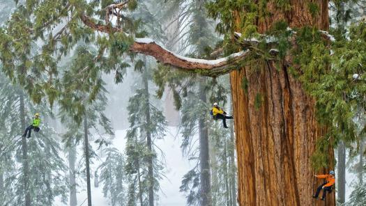 01-sequoia-climbing-team.ngsversion.1505440941351.adapt.1900.1